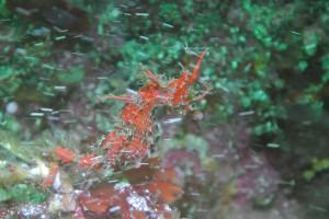 130508伊豆海洋公園ハナタツ1