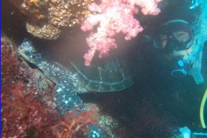 130615伊豆海洋公園アオウミガメ