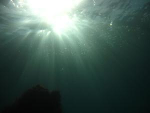 130831伊豆 海洋公園2