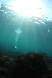 130912伊豆 海洋公園1