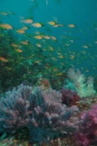 131116伊豆 海洋公園1