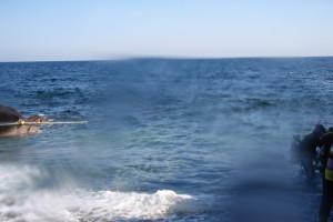 131124伊豆 海洋公園