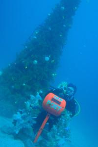 131217伊豆 海洋公園クリスマスツリー