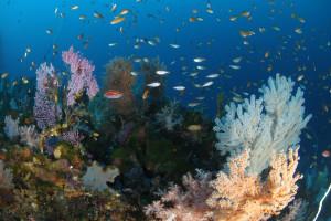 130124伊豆 海洋公園2の根