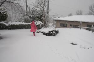 130208伊豆 大雪2