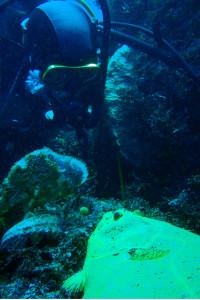 140217伊豆 海洋公園黄金ヒラメ
