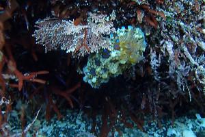 20140218伊豆 海洋公園ミヤコウミウシ