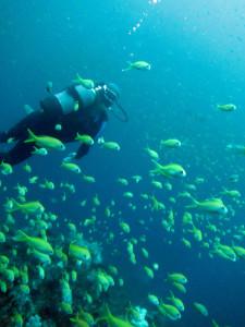 20140723伊豆 海洋公園二の根