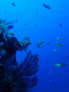 20140917伊豆 ダイビング 伊豆海洋公園一の根