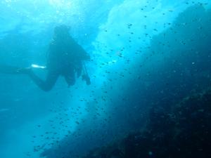 20140921伊豆 ダイビング 伊豆海洋公園ミナミハタンポ