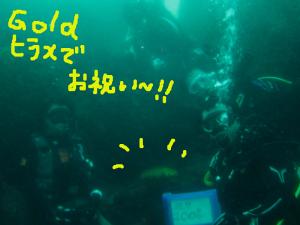 140907伊豆 海洋公園 黄金ヒラメ