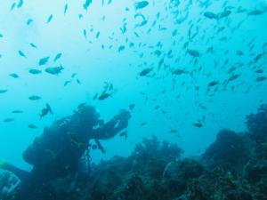 20140924伊豆 ダイビング 伊豆海洋公園キンギョハナダイ