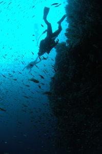 20141002伊豆 ダイビング 伊豆海洋公園2