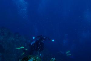 20141113伊豆 ダイビング 伊豆海洋公園一の根