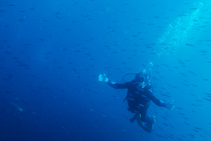 20141115伊豆 ダイビング 伊豆海洋公園キビナゴ