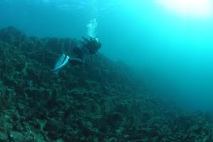 20141114伊豆 ダイビング 伊豆海洋公園ブリマチの根