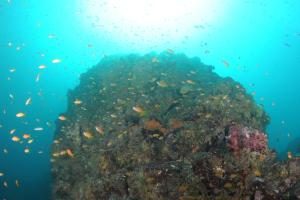 20141114伊豆 ダイビング 伊豆海洋公園ブリマチの根2
