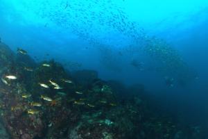 20141114伊豆 ダイビング 伊豆海洋公園カケアガリ
