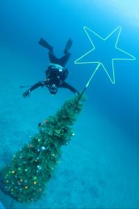 20141119伊豆 ダイビング 伊豆海洋公園クリスマスツリー