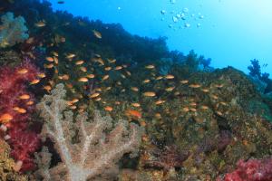 20141205伊豆 ダイビング 伊豆海洋公園二の根1