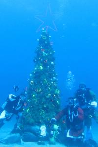 141213伊豆 ダイビング 伊豆海洋公園 水中クリスマスツリー