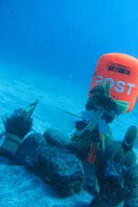 150102伊豆 ダイビング 海洋公園 水中ポスト