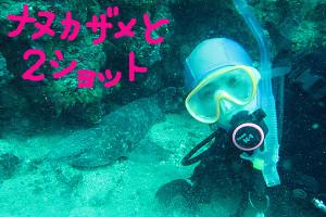 150227伊豆 ダイビング 海洋公園 ナヌカザメ