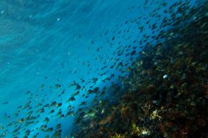 20150210伊豆 ダイビング 海洋公園 ミナミハタンポ