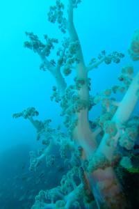 20140318伊豆 ダイビング 伊豆海洋公園 ブリマチ