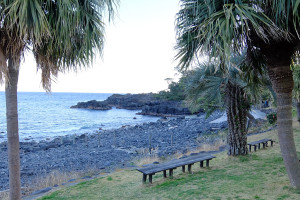 20150325伊豆 ダイビング 伊豆海洋公園
