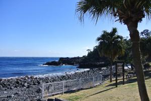 20140311伊豆 ダイビング 海洋公園