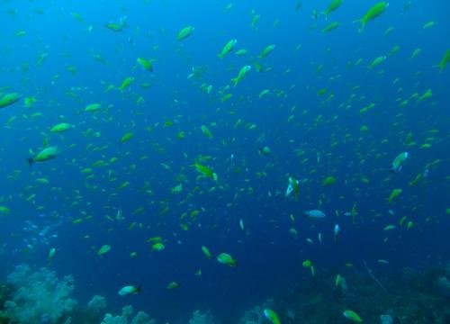 20150604伊豆 ダイビング 伊豆海洋公園 2の根