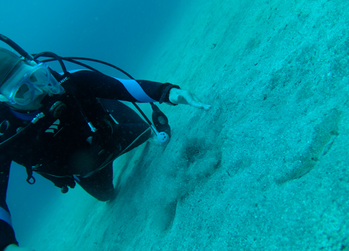 20150601伊豆 ダイビング 伊豆海洋公園 カスザメ