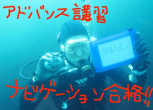 20150725伊豆 ダイビング 伊豆海洋公園  (2)