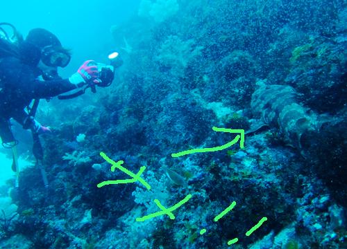 20150704伊豆 ダイビング 伊豆海洋公園オオセ