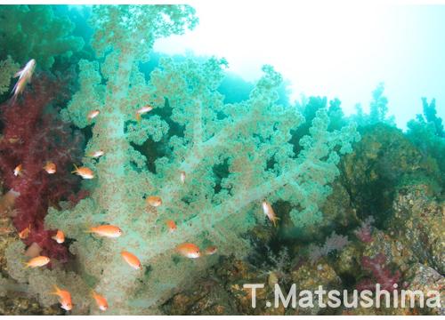 20150805伊豆 ダイビング 伊豆海洋公園 二の根