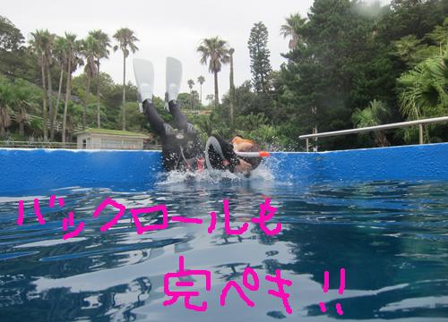 20150820伊豆 ダイビング 伊豆海洋公園 ライセンス取得講習②