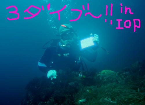 20150801伊豆 ダイビング 伊豆海洋公園 3DIVE