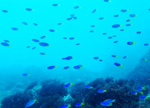 20150828伊豆 ダイビング 伊豆海洋公園 (4)1