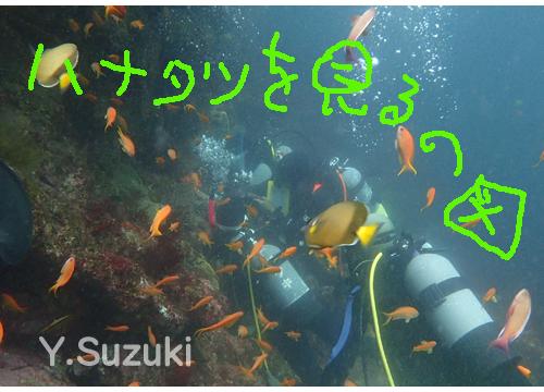 20150803伊豆 ダイビング 伊豆海洋公園 1