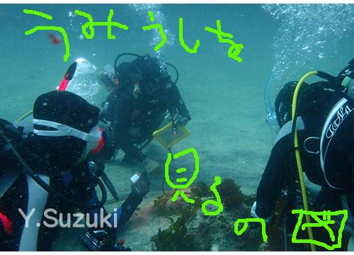 20150803伊豆 ダイビング 伊豆海洋公園 (6)