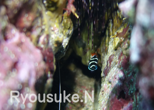 20150913伊豆 ダイビング伊豆海洋公園 (2)