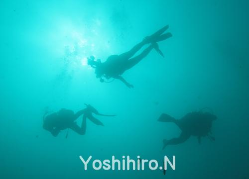 20150920伊豆 ダイビング 井田