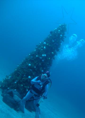 20151130伊豆 ダイビング 伊豆海洋公園 (4)