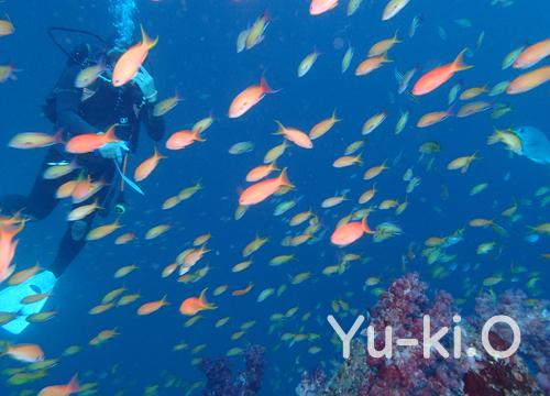 20151031伊豆 ダイビング 伊豆海洋公園 2の根