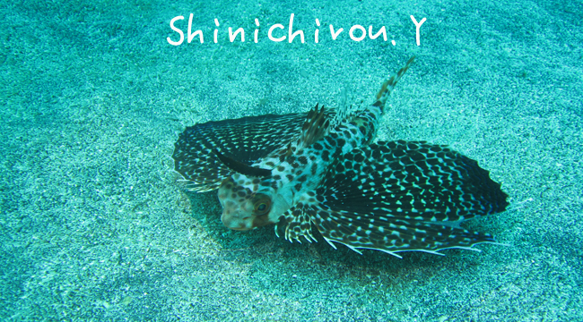 20160725伊豆 ダイビング 伊豆海洋公園 (1)のコピー
