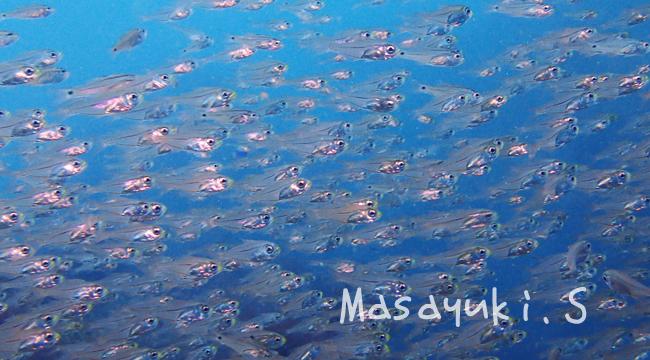 20160930伊豆 ダイビング 伊豆海洋公園7