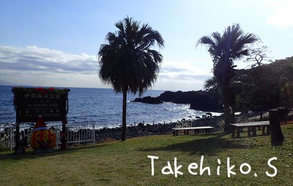 20161225伊豆 ダイビング 伊豆海洋公園4