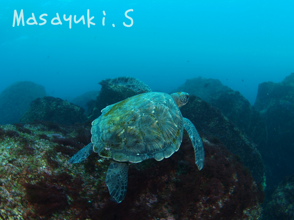 20170111伊豆 ダイビング 伊豆海洋公園4