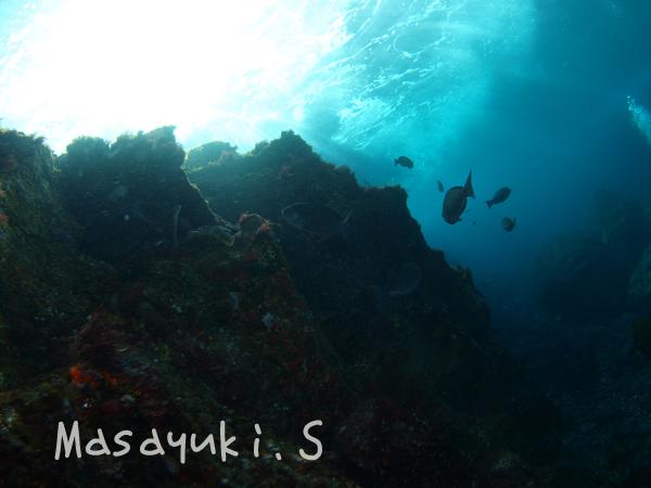 20170111伊豆 ダイビング 伊豆海洋公園5